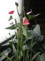 もうすぐ開花?