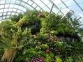 シンガポールの植物たち