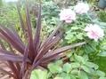 セロジネの花が!