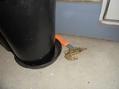 雷雨の後の来客(※蛙の写真あり)