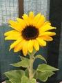 夏の花…🌻