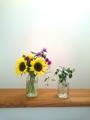 向日葵を花屋サイズに育てる方法