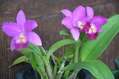 ムラサキ色の花