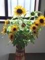 ひまわり切り花に