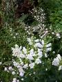 今朝の庭。