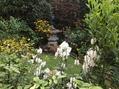 🌻ルドベキア  タカオの庭🌻
