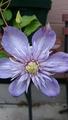 紫陽花(*^.^*)