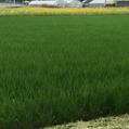 ひまわり畑の出現
