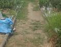 収穫追肥貸農園20160805