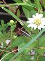 母の花たち