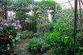 夕方の庭の様子
