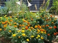 段々と 夏のお庭になってきました