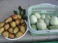 今朝の収穫 いちじく 一口メロン オクラ。。。