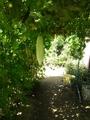 緑のカーテントンネル