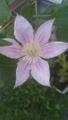二番花咲きました❗