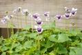 今日の元気印の花