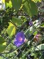 ごみ収集場に咲いた花