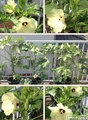 果菜類栽培…今朝の「収穫」‼️