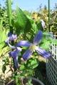 今日の庭から・・・・