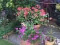 猛暑日の庭