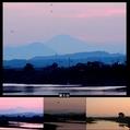 白鷺の群れと富士山と。ウォーキングMS④186日目(1281日目)