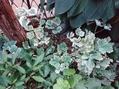 庭の👸プリンセス達がボロボロ〰(  TДT)