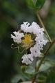 色々な花たち