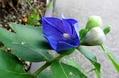 青系のお花たち