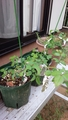 初心者の園芸