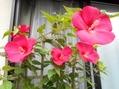 色んなお花②
