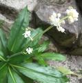 今日の花   3