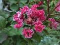 朝の花(夏に咲く小さな花)、