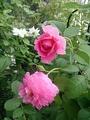 小さなベランダにおける植物の適切な配分