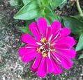 今日の花   2