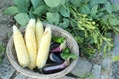 枝豆とスイートコーン