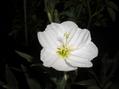 種から開花~✿