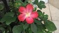 このお花の名前を教えてくださいm(__)m