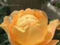 お盆休みは・・・。/二番花