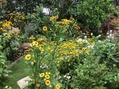 雨台風の前に  3  庭