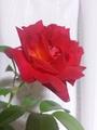 台風➰🌀避難した花🌼