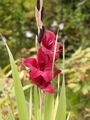 赤黒いお花いいよね