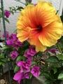庭の花いろいろ。