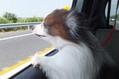 レオンさんとドライブに行きました。