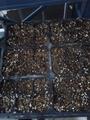 パンビオ種蒔き第一弾