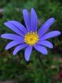 赤い花 白い花 青い花