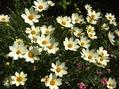 元気な花たち