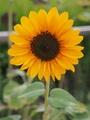 8月の花♪