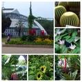 京都府立植物園に行ってきました。