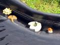 水に浮く陶器たち