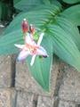 このお花はなんでしょう?